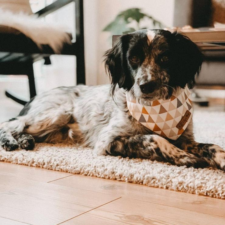 Manni - toller Familienhund
