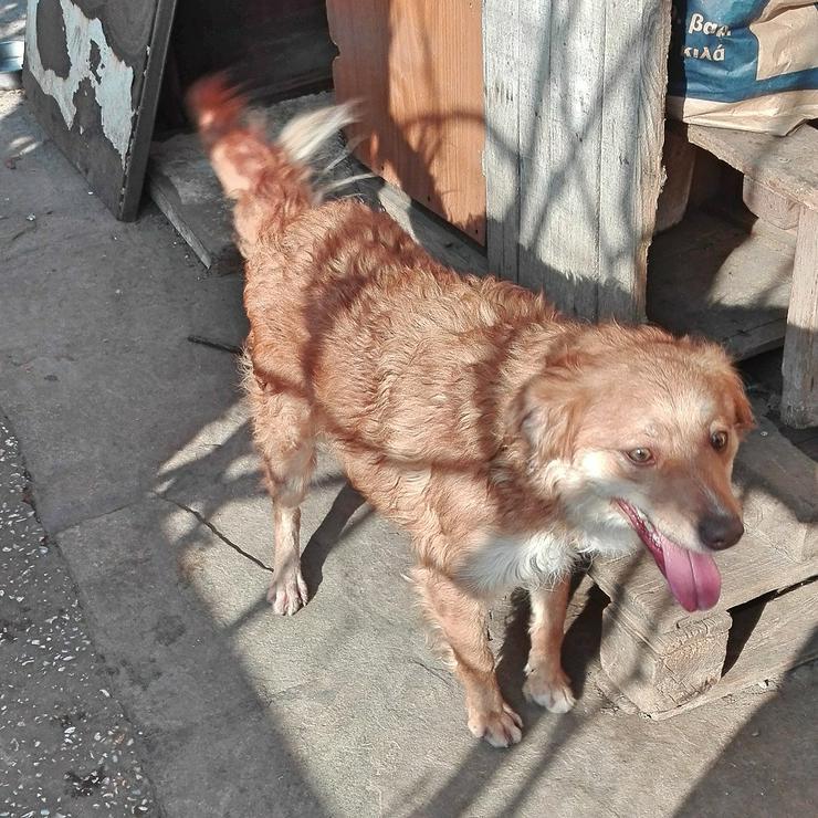 Rika - aufgeschlossen zu Mensch und Hund