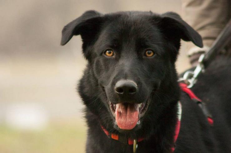 Sammy Junior (Tierhilfe Franken) - Mischlingshunde - Bild 1