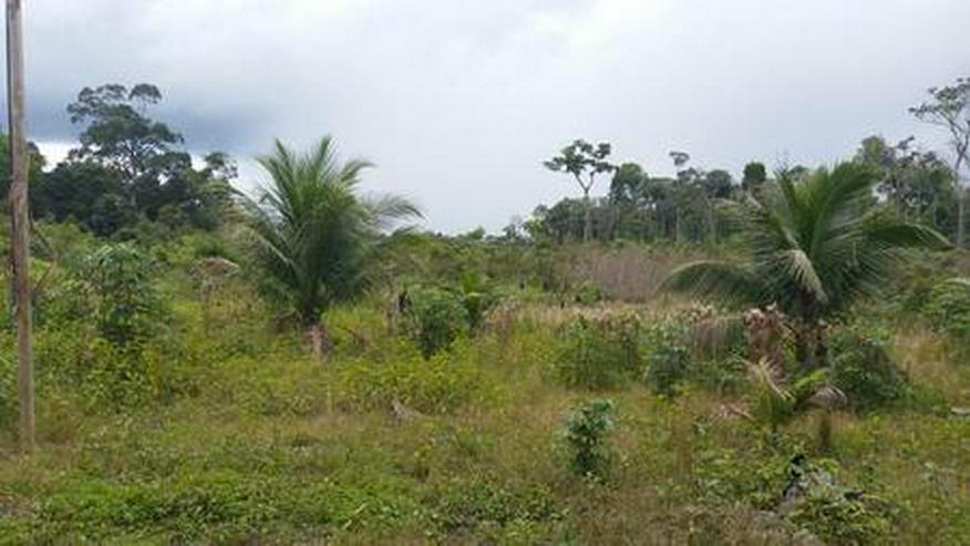 Bild 4: Brasilien 50 Ha Früchtefarm  -Tiefpreis - Grundstück