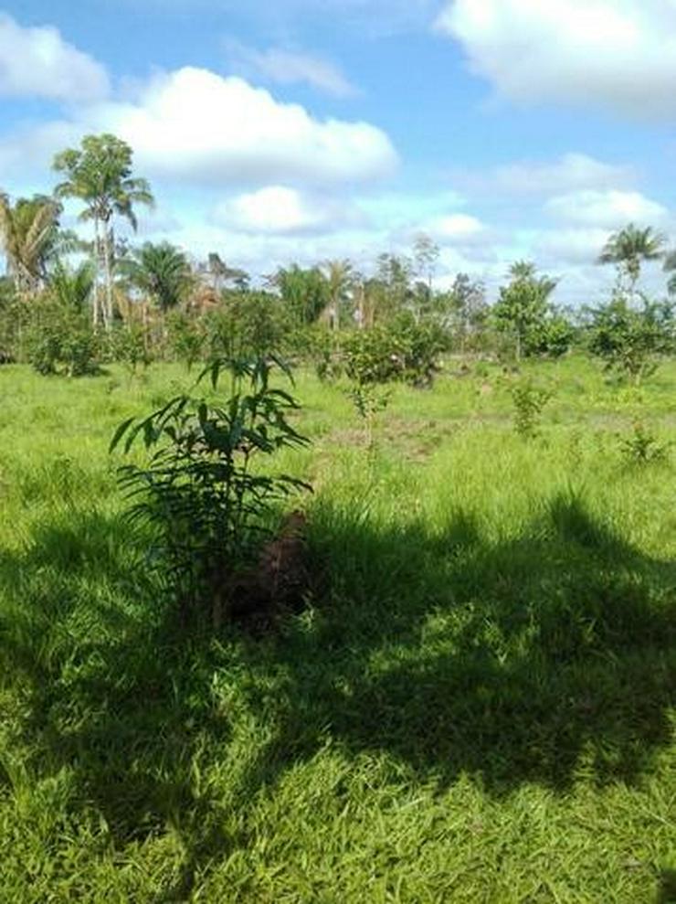 Brasilien 50 Ha Früchtefarm  -Tiefpreis - Grundstück - Grundstück kaufen - Bild 1
