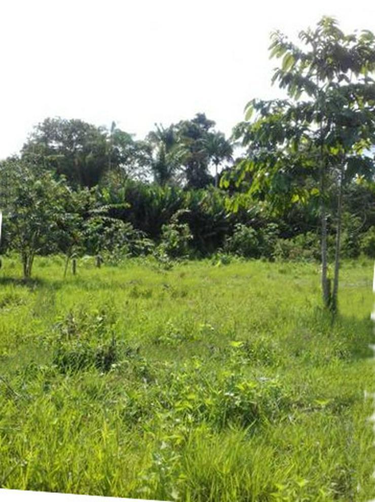 Bild 3: Brasilien 50 Ha Früchtefarm  -Tiefpreis - Grundstück