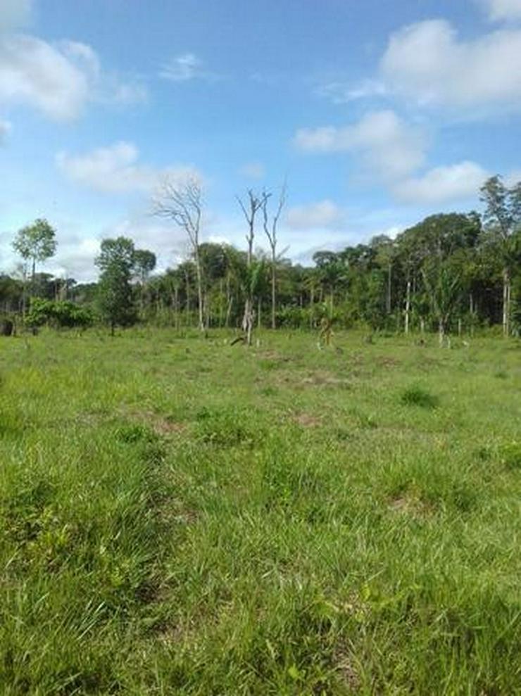 Bild 2: Brasilien 50 Ha Früchtefarm  -Tiefpreis - Grundstück