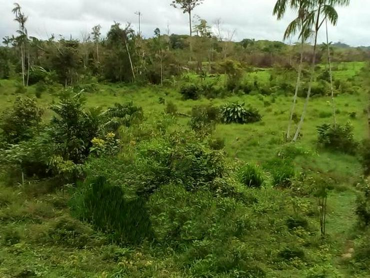 Brasilien 480 Ha Grundstück östlich von Manaus AM