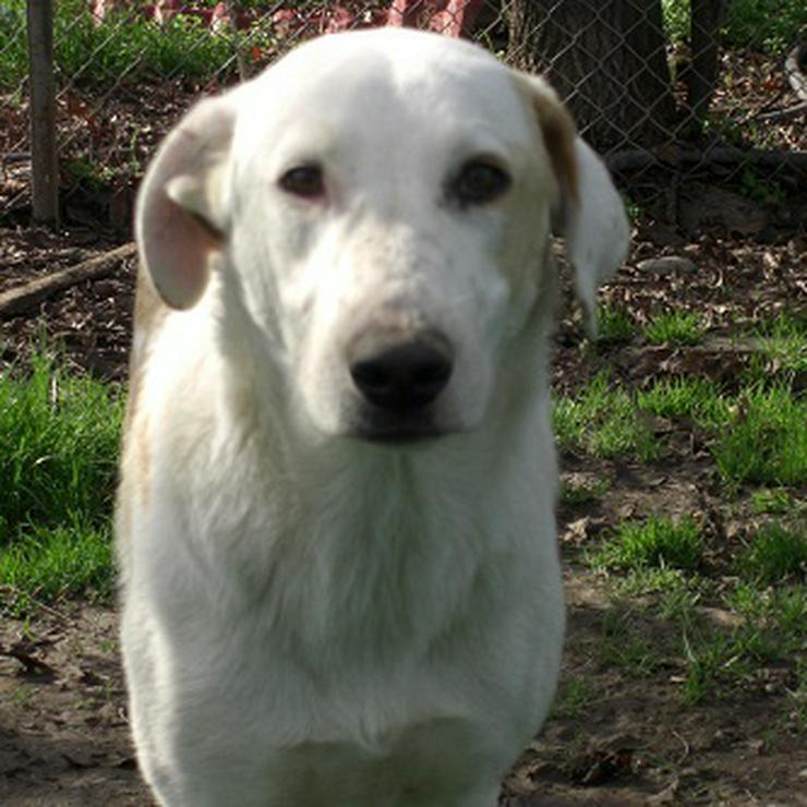 Angel - agile, junge Hündin - Mischlingshunde - Bild 1