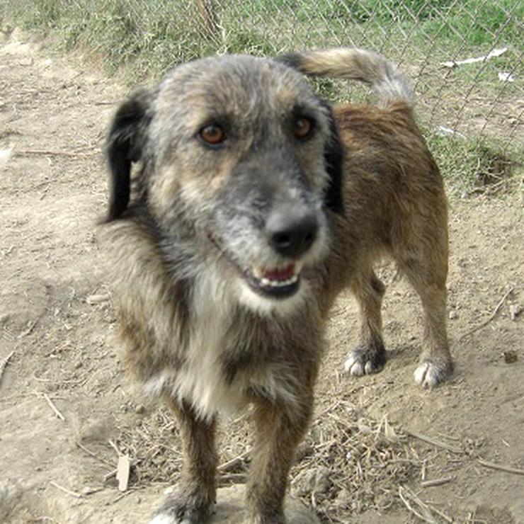 Daphne - lieb und kinderfreundlich - Mischlingshunde - Bild 1