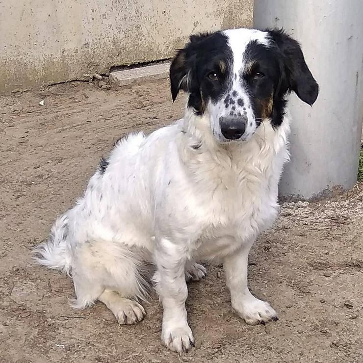 Sawina - aufgeweckt und neugierig - Mischlingshunde - Bild 1