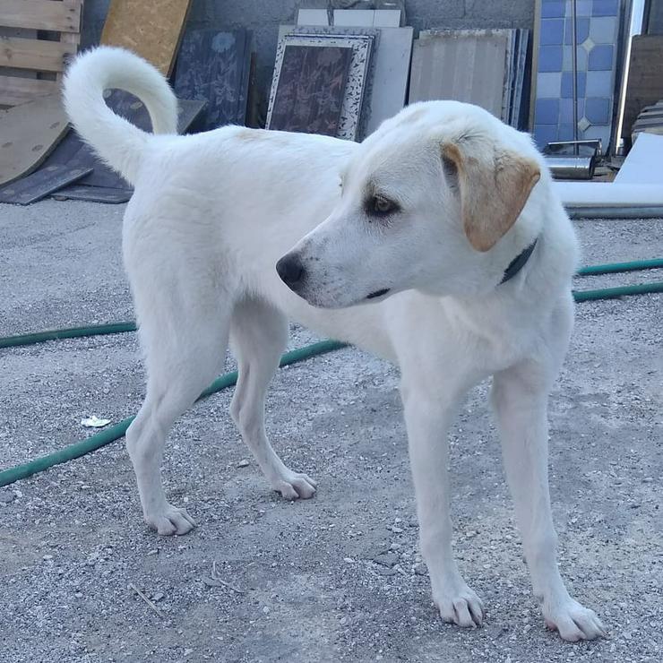 Zina - freundlich und aufgeweckt - Mischlingshunde - Bild 1