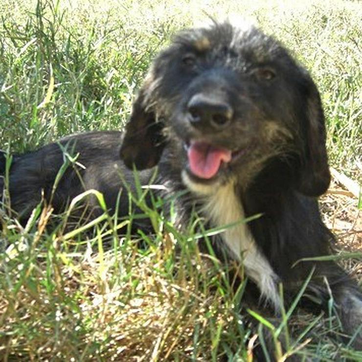 Koko - kleiner Sonnenschein - Mischlingshunde - Bild 2