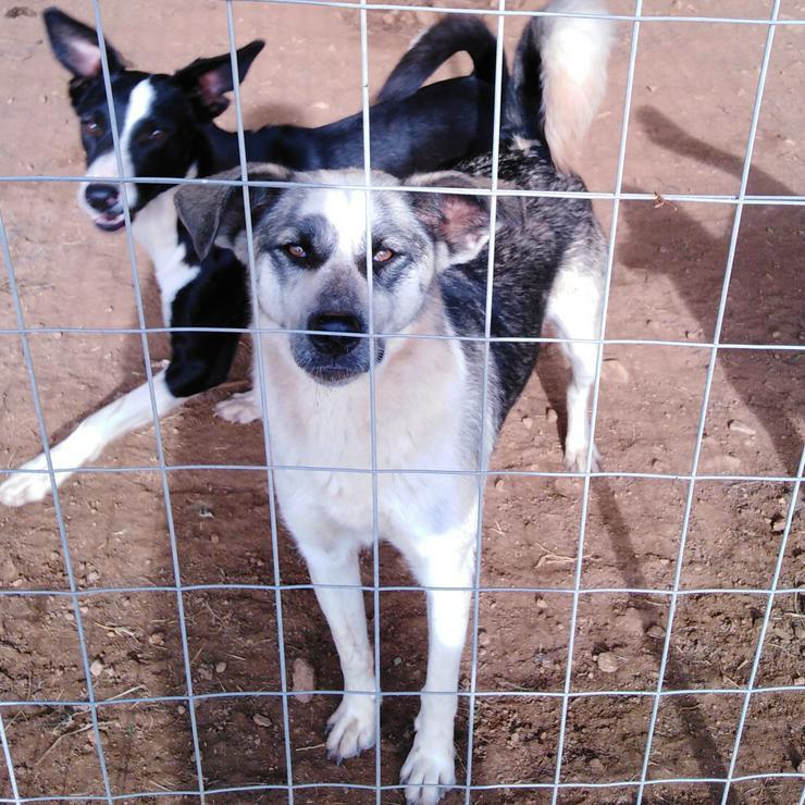 Maska - anhänglich und freundlich - Mischlingshunde - Bild 1