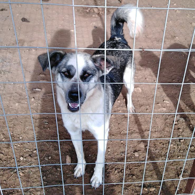 Maska - anhänglich und freundlich - Mischlingshunde - Bild 2