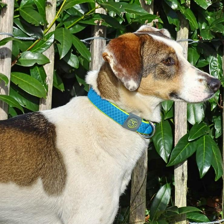 Tonia - voller Energie und Lebensfreude - Mischlingshunde - Bild 1