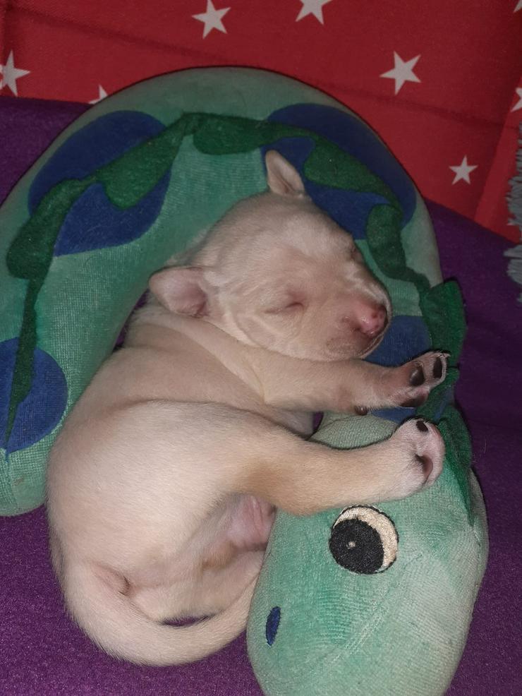Kleine Fellnasen suchen ein zu hause - Mischlingshunde - Bild 1