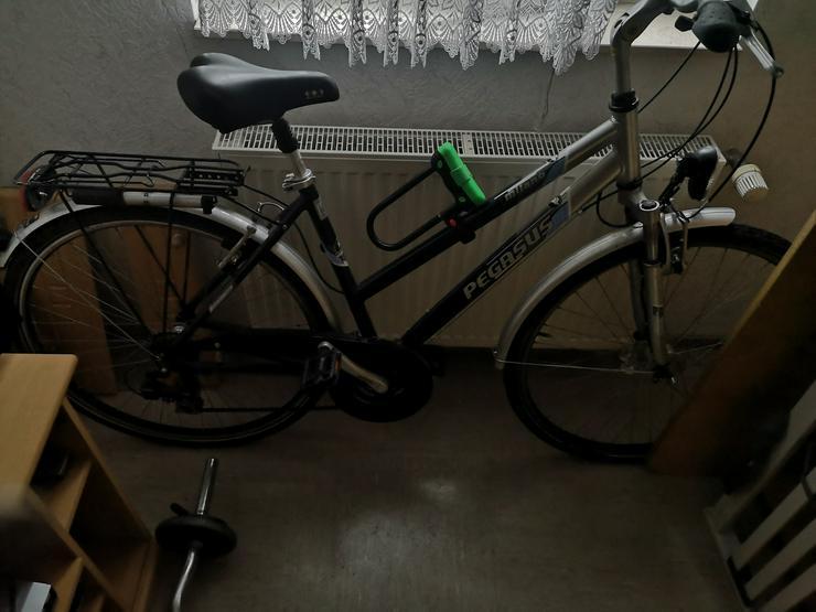 Pegasus Fahrrad