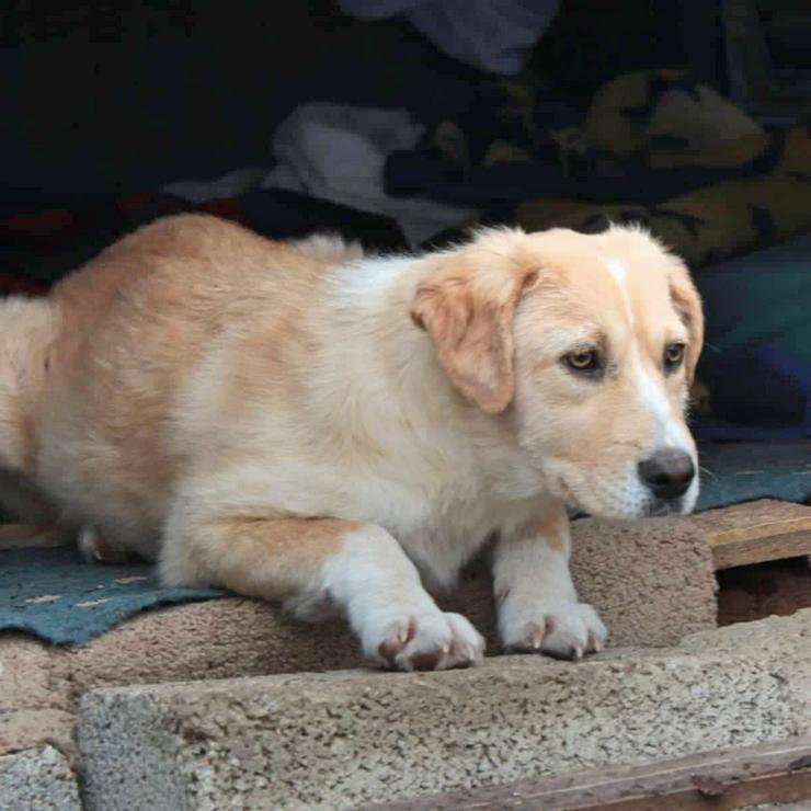 Gina - ruhiger Jundhund - Mischlingshunde - Bild 1