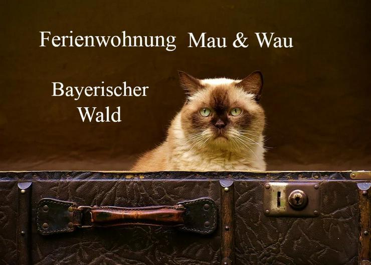 Ferien mit Katzen im Bayerischen Wald - Sommer 2020 - Ferienwohnung Mau & Wau