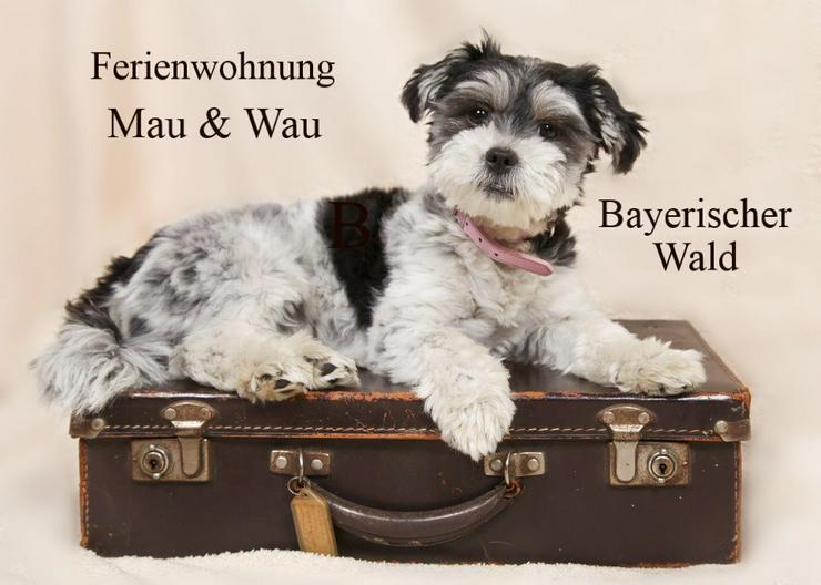 Ferien mit Hunden - Bayerischer Wald 2020 - Ferienwohnung Mau & Wau