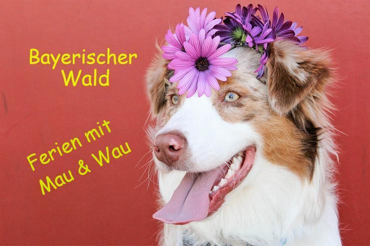 Ferien mit Hunden - Bayerischer Wald - Frühling 2020 - Ferienwohnung Mau + Wau