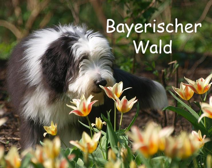 Ferien mit Hunden - Bayerischer Wald - Frühling 2020 - Ferienwohnung Mau und Wau