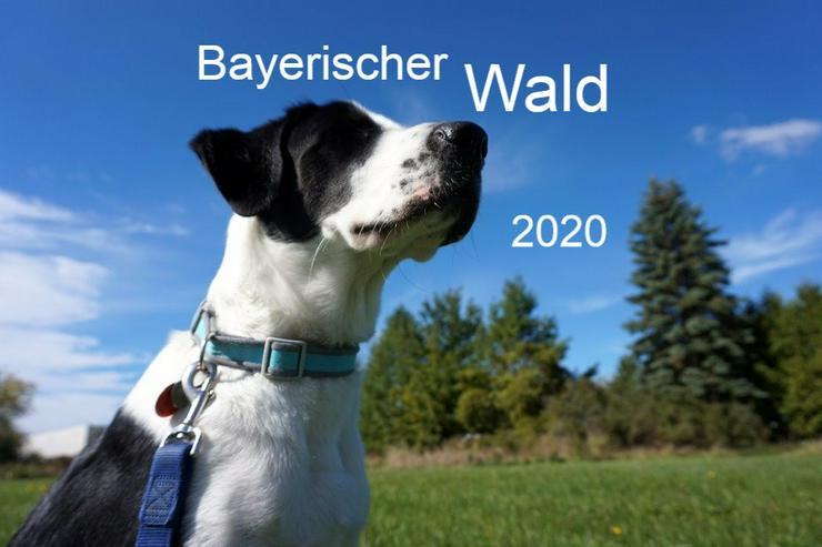 Ferien mit Hunden im Bayerischen Wald - Frühling 2020 - Ferienwohnung Mau & Wau