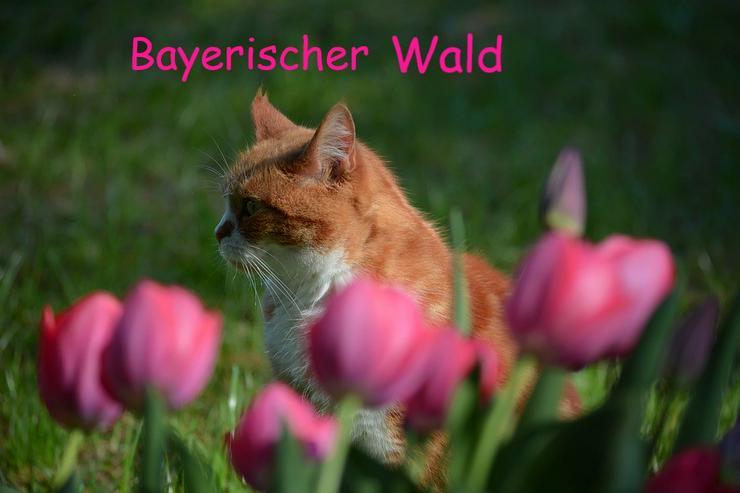 Ferien mit Katzen im Bayerischen Wald - Frühling 2020 - Ferienwohnung Mau & Wau