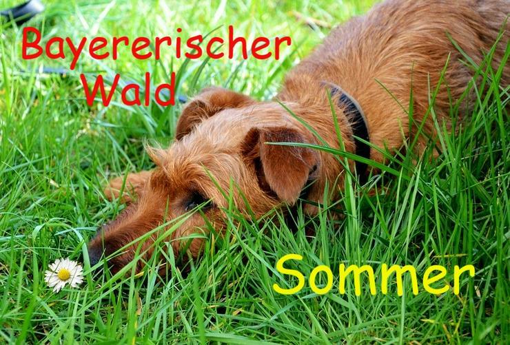 Urlaub mit Hunden im Bayerischen Wald - Sommer 2020 - Ferienwohnung Mau & Wau