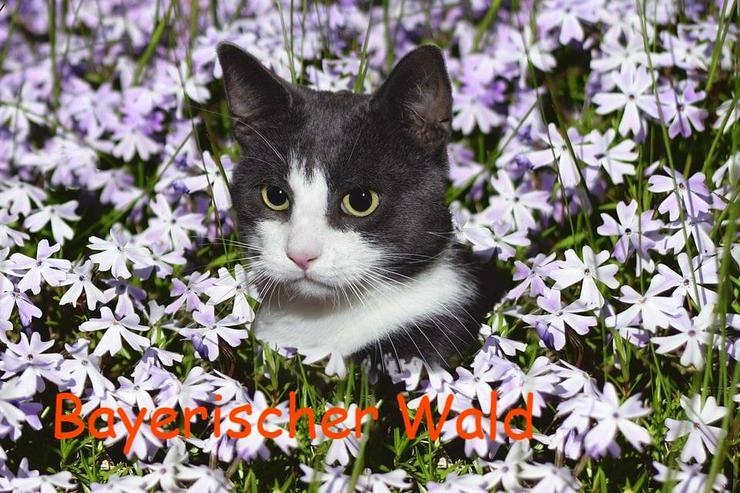 Urlaub mit Katzen im Bayerischen Wald - Sommer 2020 - Ferienwohnung Mau & Wau