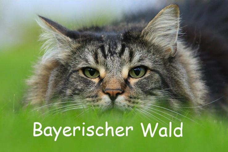 Ferien mit Katzen - Bayerischer Wald - Sommer 2020 - Ferienwohnung Mau & Wau