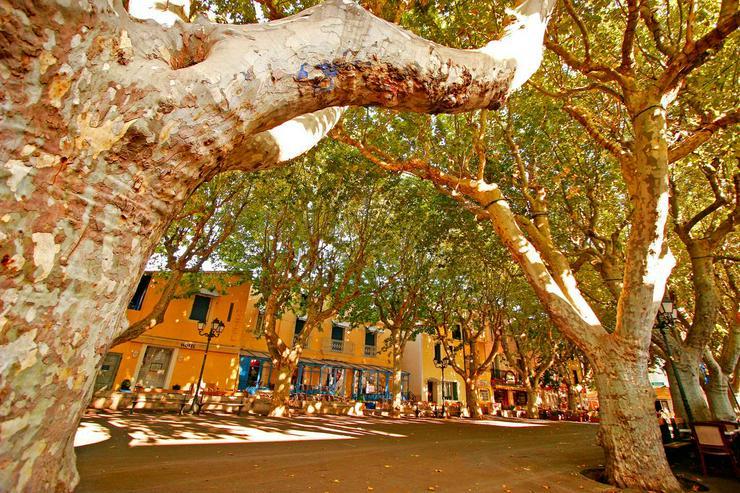 Bild 11: Süd-Frankreich: Genießen Sie von der mediterranen Sonne während der Ferien 2020