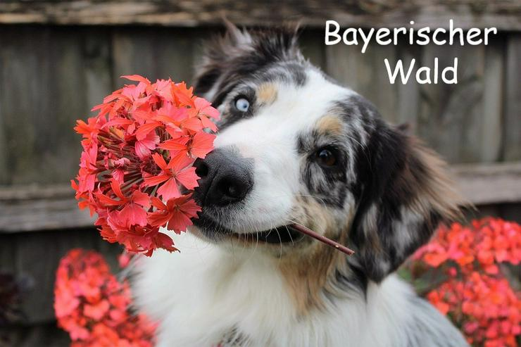 Ferien mit Hunden im Bayerischen Wald - Ferienwohnung Mau & Wau
