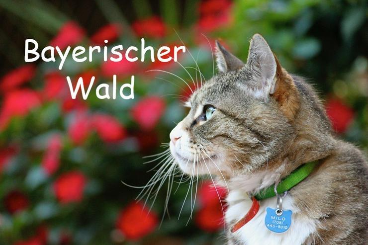 Ferien mit Katzen - Bayerischer Wald - Luftkurort Falkenstein - Transport - Bild 1