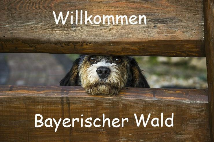 Ferien mit Hunden im Bayerischen Wald - Ferienwohnung Mau & Wau - Transport - Bild 1