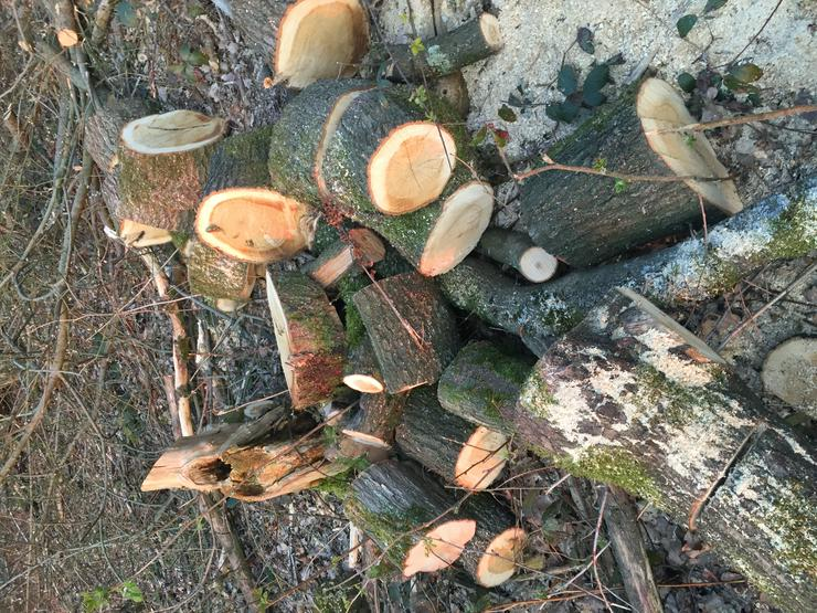 Brennholz für Selbstabholer