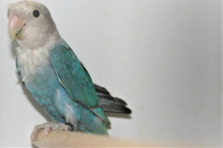 Verkaufe Rosenköpfchen und neues Vogelzubehör