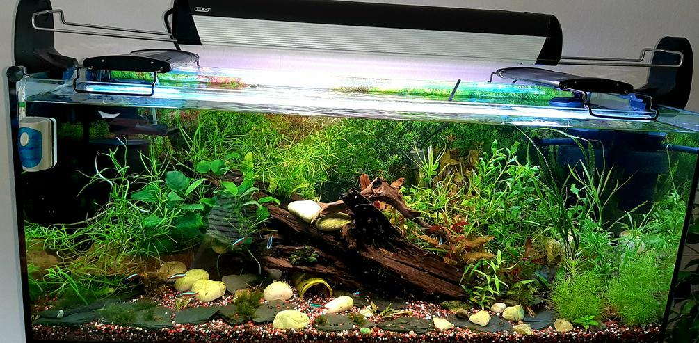 Aquarium 160L,all inklusive