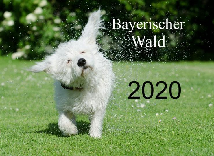 Ferien mit Hund & Katze - Bayerischer Wald 2020 - Ferienwohnung Mau + Wau