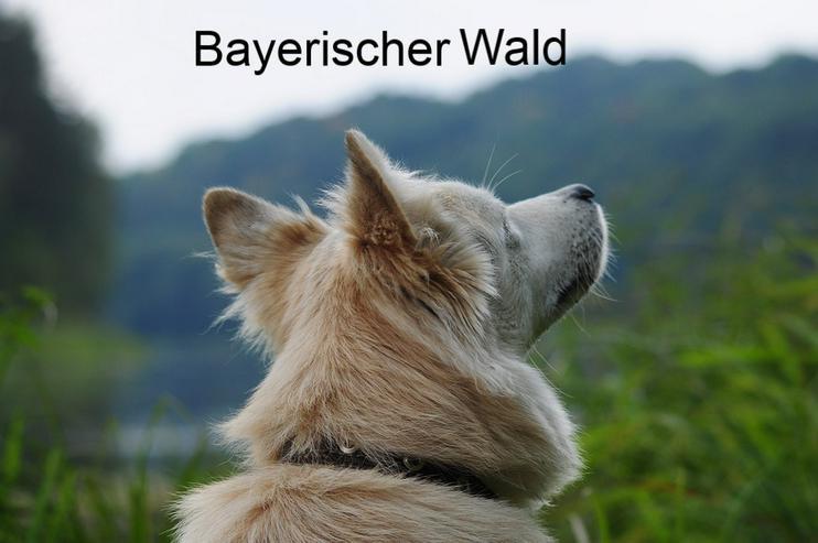 Ferien mit Hund & Katze -Bayerischer Wald - Ferien mit Mau und Wau