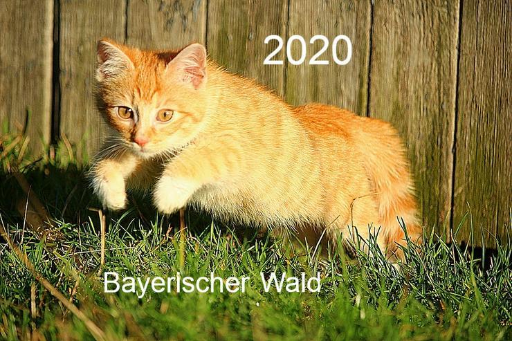 Ferien mit Katzen & Hunden - Bayerischer Wald - Ferien mit Mau und Wau