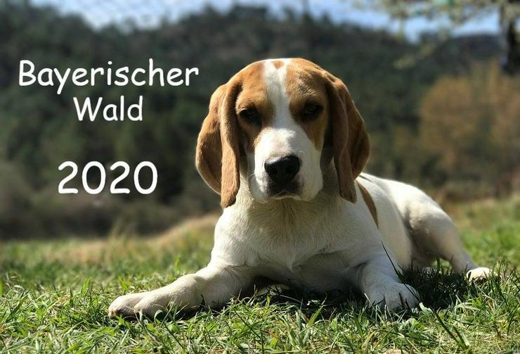 Ferien mit Hund und Katze - Bayerischer Wald - Ferien mit Mau & Wau