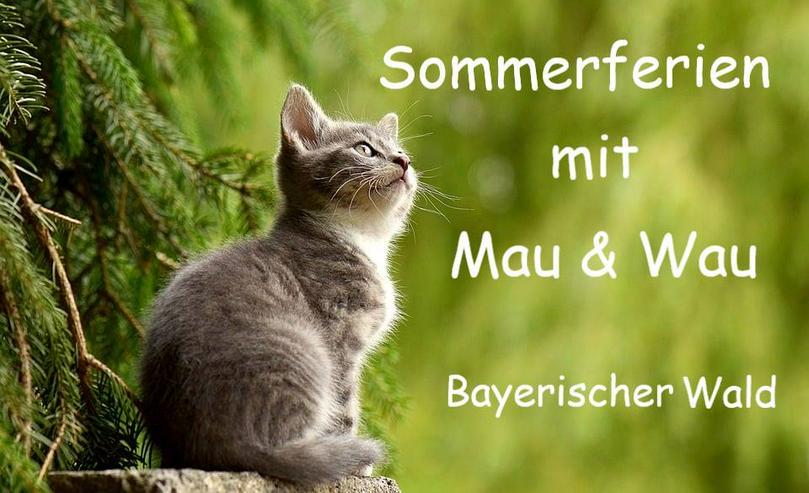 Urlaub mit Katzen im Bayerischen Wald - Luftkurort Falkenstein - Ferien mit Mau