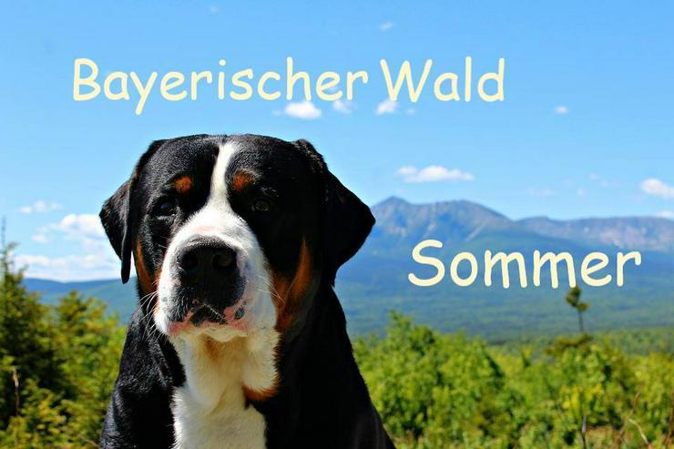 Urlaub mit Hunden und Katzen - Bayerischer Wald - Ferien mit Mau & Wau