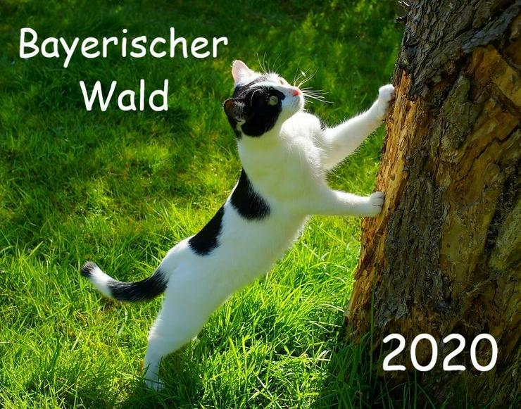 Urlaub mit Katzen und Hunden im Bayerischen Wald - Ferienwohnung Mau + Wau