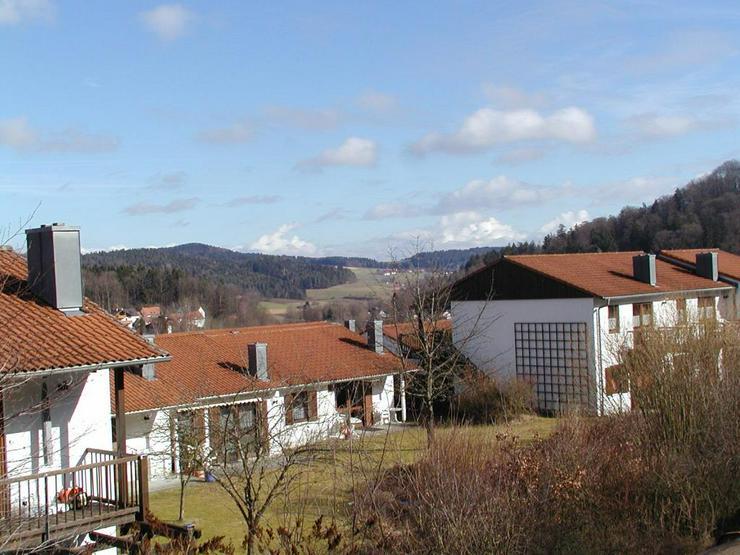 Ferien mit Hunden und Katzen im Bayerischen Wald - Sport & Freizeit - Bild 2
