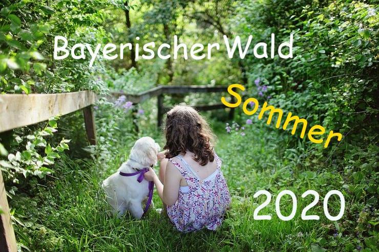 Familienurlaub mit Hunden und Katzen im Bayerischen Wald - Luftkurort Falkenstein