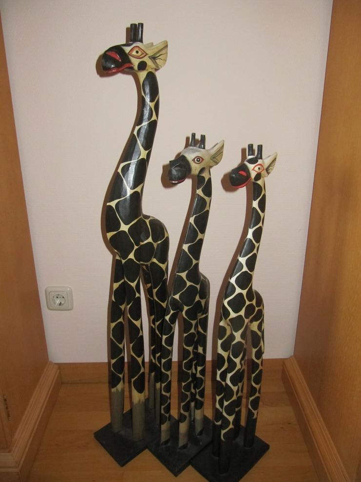 Drei Giraffen suchen ein nettes Zuhause.