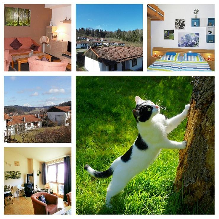 Urlaub mit Katze und Hund im Bayerischen Wald -Ferienwohnung Mau & Wau
