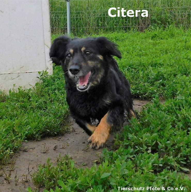 Citera ist eine nette Seniorin die einen Platz als Einzelprinzessin sucht