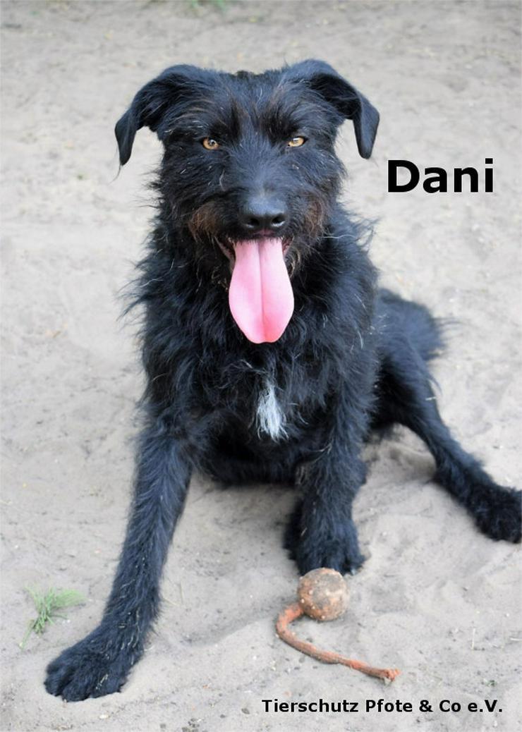 Dani ist ein verspielter neugieriger Rüde