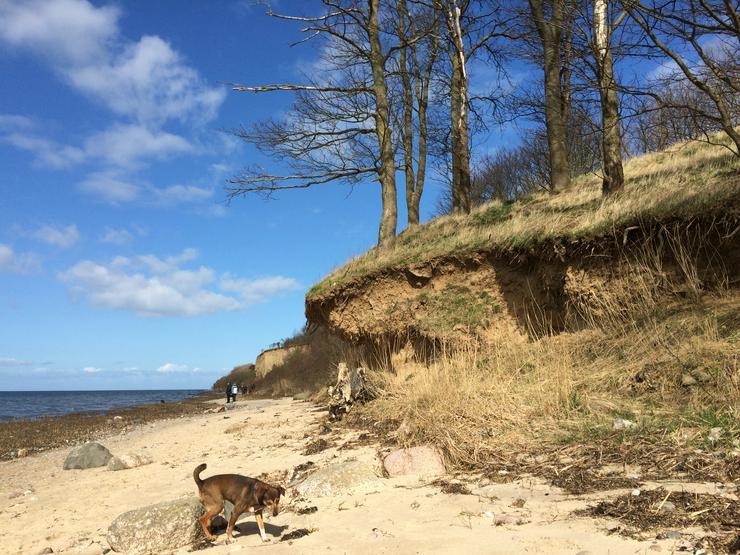 Ferienwohnung an der Ostsee * Hund inkl. * WLAN inkl. * Saunahaus * ab 39€ pro Nacht