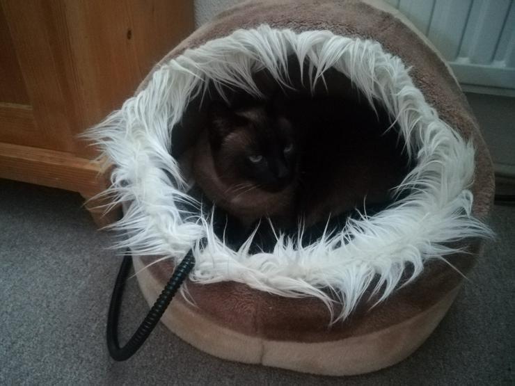 Bild 5: Ansbacher Katzenpenion, Katzenpension, catsitting, Hausbetreuung, Tierbetreuung, Catsitting